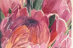 Hawaii King Protea