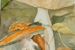 Mushrooms-in-Color