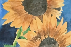 Sunflowers Up Close