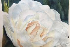 Tim's White Rose