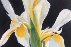 Wild Iris in Gold and White