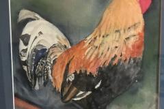 Kauai Rooster Struts his Stuff